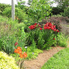 Red Asiatic Lilies - Daniel Stowe Botanical Garden - Belmont, NC  5-12-12