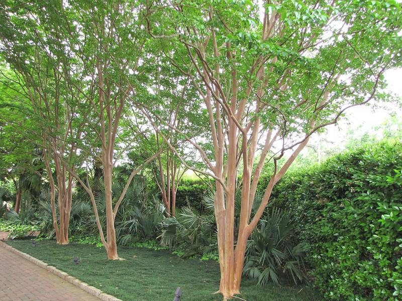 Crape Myrtles - Daniel Stowe Botanical Garden - Belmont, NC  5-12-12