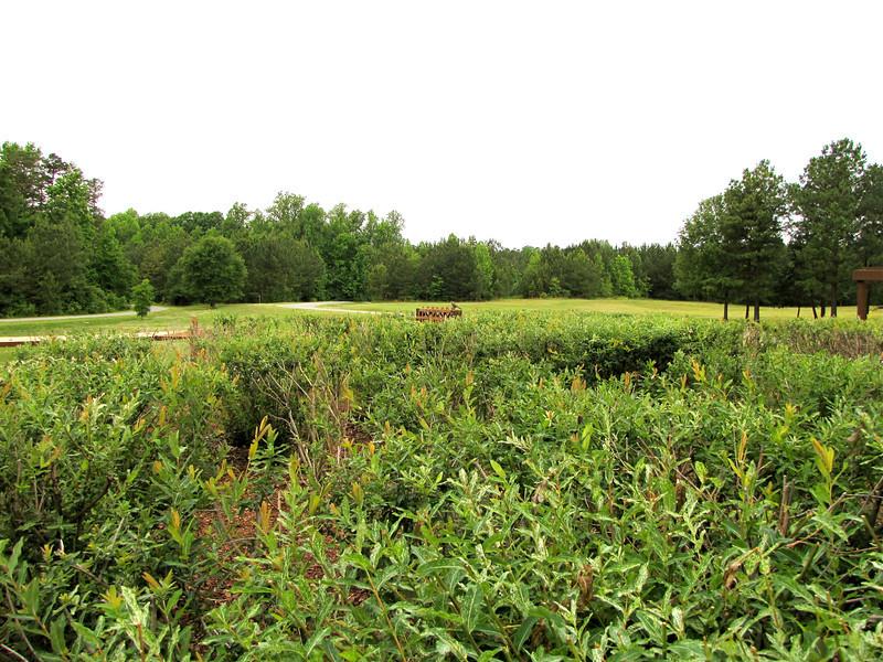 Meadows With Native Grasses - Daniel Stowe Botanical Garden - Belmont, NC  5-12-12