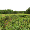 Meadows With Native Grasses - Daniel Stowe Botanical Garden - Belmont, NC  5-12-12