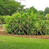 Bamboo For Planting Some Kind of Vines - Daniel Stowe Botanical Garden - Belmont, NC  5-12-12