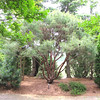 Looking Through to the Meadow at The End of Conifer Garden - Daniel Stowe Botanical Garden - Belmont, NC  5-12-12