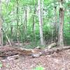 A Nurse Log Example - Daniel Stowe Botanical Garden - Belmont, NC  5-12-12