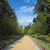 Path in Historic Gardens to the Rose Garden Ahead - Sarah P. Duke Gardens - Durham, NC