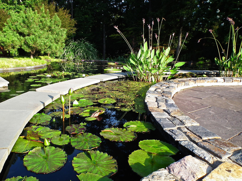 Early Morning Sun on Virtue Peace Pond - Sarah P. Duke Gardens - Durham, NC<br /> In Doris Duke Gardens area behind the Visitor Center.