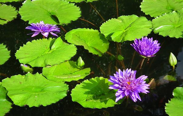 Durham, NC - Sarah P. Duke Gardens - Summer Visit - 9/1/12