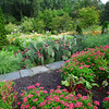 """View From the Bench - Sarah P. Duke Gardens - Durham, NC<br /> Such diversity and thoughts of how many bees and butterflies and hummingbirds are blessed by this area.  I didn't see any """"expired"""" flowers so the birds don't get a chance at any seedsd but the plants in this area don't seem to provide them anyway."""
