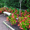 Bench Looks Down Upon the Terraced Gardens - Sarah P. Duke Gardens - Durham, NC<br /> Columblar Flowering Peach