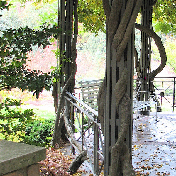 Notice How The Wisteria Vines Are Entwined In The Steel Posts