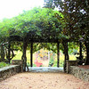 Approaching Huge Steel Gazebo With Wisteria