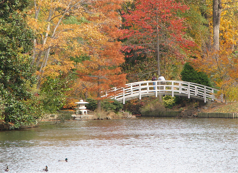 Lake, Ducks, Bridge, Lantern - Sarah P. Duke Garden