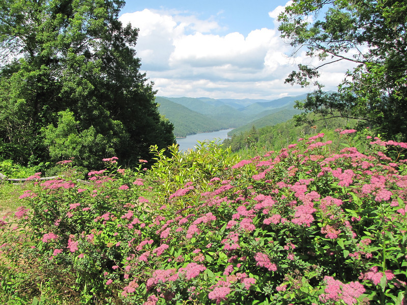 Spireas with View of Fontana Lake in the Smoky Mountains, NC