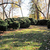 Some Boxwoods and Trees Survived From Original 1815 Gardens - Historic Rosedale Plantation - Charlotte, NC  11-27-10<br /> The remaining plantings are from a restoration undertaken by Mrs. Louise Heagy Davidson in the early 1900's.