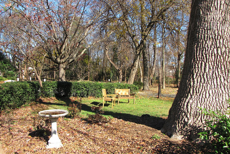 Bird Bath and Resting Place By the Green Ash Big Tree - Historic Rosedale Plantation - Charlotte, NC  11-27-10