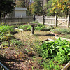 Four Square Kitchen Garden Behind the House - Historic Rosedale Plantation - Charlotte, NC  11-27-10
