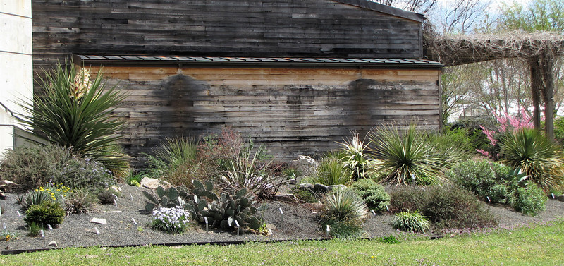 Arid Garden Area - JC Raulston Arboretum, Raleigh, NC  3-24-11
