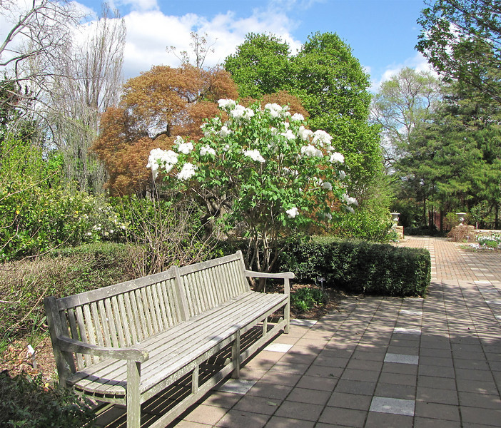 """Many Places to Sit and Ponder the Beauty - JC Raulston Arboretum, Raleigh, NC  3-24-11<br /> The White Bush is Oleaceae Syringa - Hybrid Lilac 'Betsy Ross"""" That Smelled Heavenly"""