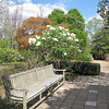 "Many Places to Sit and Ponder the Beauty - JC Raulston Arboretum, Raleigh, NC  3-24-11<br /> The White Bush is Oleaceae Syringa - Hybrid Lilac 'Betsy Ross"" That Smelled Heavenly"