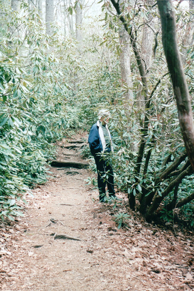 Randal on Trail with Huge Rhododendrons at Linville Falls, Milepost 316 on Blue Ridge Parkway, NC  4-11-04