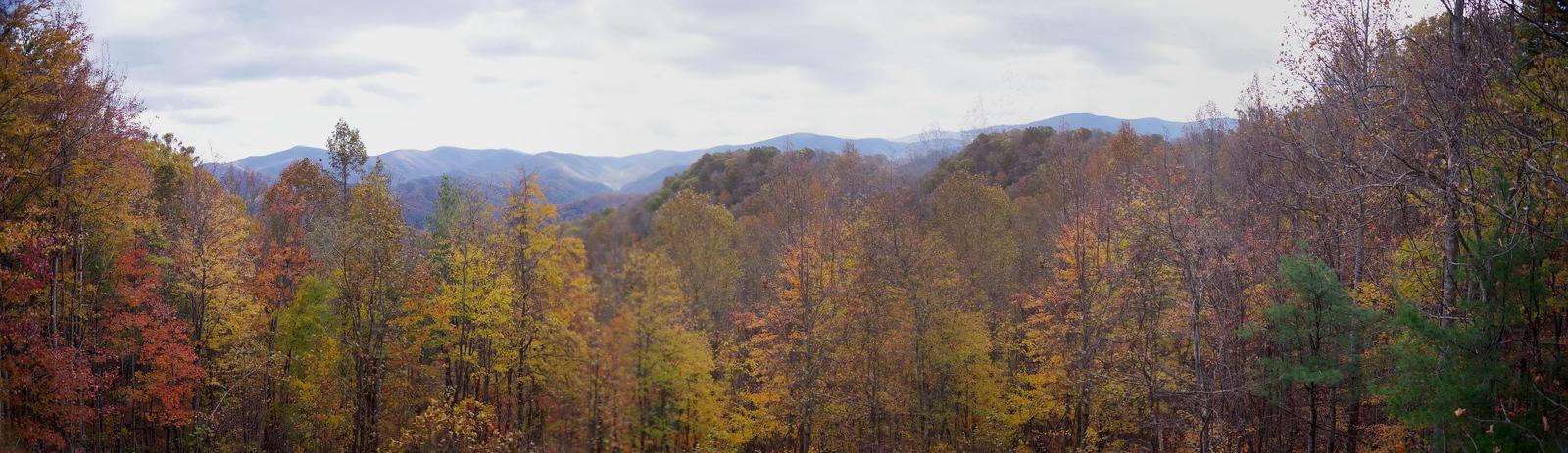 Roan Mt SP, TN
