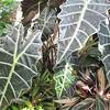 Rainforest Habitat - NC Arboretum, Asheville, NC  4-9-09