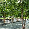 Bubbling Water and Outdoor Tables with Trees - North Carolina Museum of Art - Raleigh, NC   8/31/12<br /> This area seemed quite peaceful with the sound of water, the peeling bark of the trees, a place to rest or eat a picnic.  Serene.