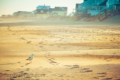 Seagull in Evening Light on a Beach