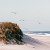 Sand Dunes and Seagulls - Pea Island National Wildlife Refuge - Cape Hatteras Seashore, NC  10-27-98