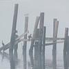Heron, Cormorant and Gulls - Atlantic Beach, NC  10-28-98