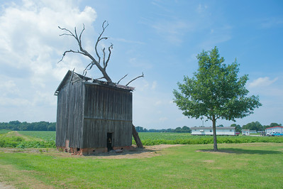 A Tabacco Shack with an old Tree breaking the roof