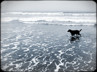 Shea dog in the surf