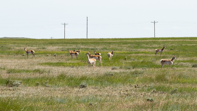 Antelope on Cousin Gene's Ranch