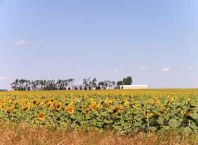 CRW_1439farm & sunflower field