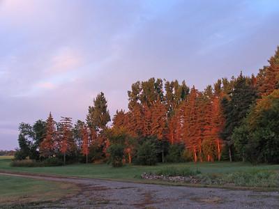 IMG_1385Shelter belt at sunrise