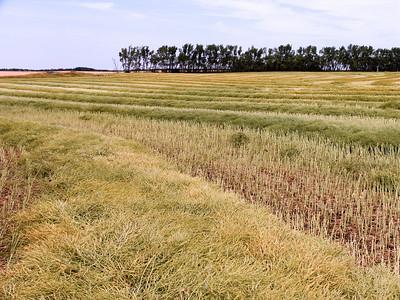CRW_1418ND field