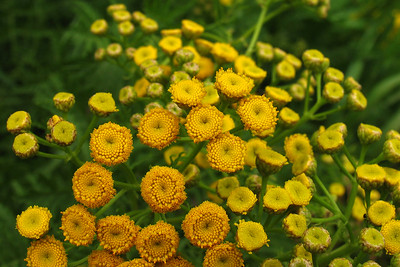 IMG_1413nd wildflowers