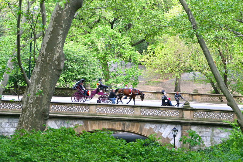 Central Park from the tour bus - or you can take a horse and carriage