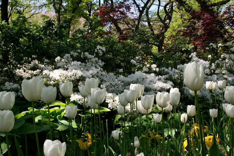 Central Park - flowers