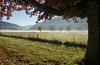 Early autumn morning Harrietville