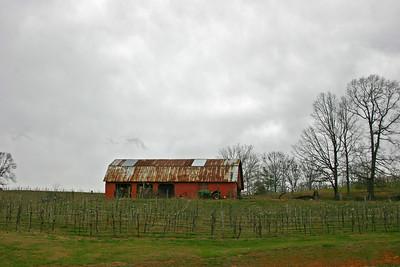 North Ga vineyards Feb 2017