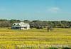 House in a Field of Mustard