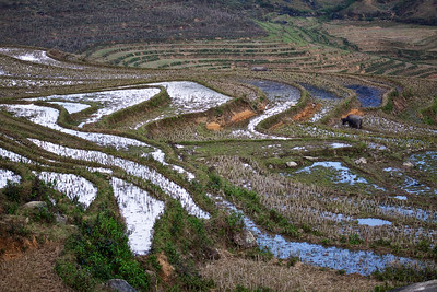 Rice fields on the way to Ta Phin village