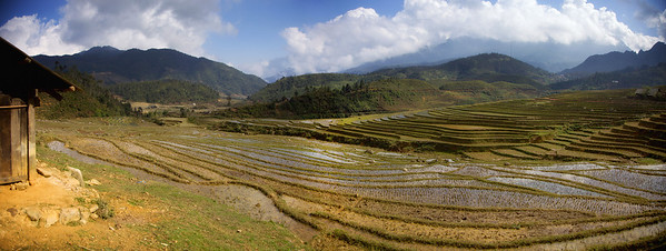 Rice fields on road to Ta Phin