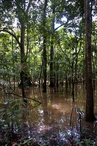 The flooded forest - between the river and terra firma