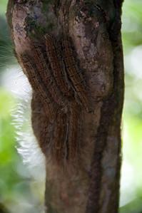 Furry caterpillars that debelop into beautiful ble butterflies. We saw a few of the butterflies.