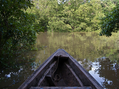 The canoe could go places in the flooded forest that bigger boats could not get to.