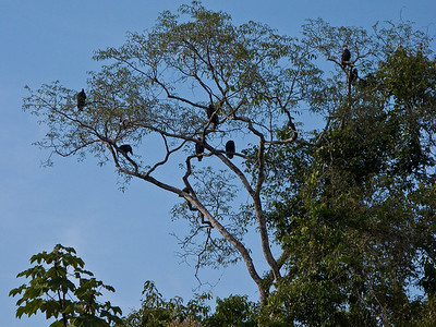 By this time I was getting tired, and grew a little concerned when I saw the vultures waiting on our path
