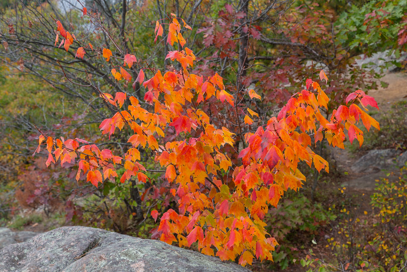 Orange and red leaves at Eagle's Nest.