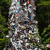 Just east of Prince Rupert along Highway 16 stands the Shoe Tree, also known as the Home For Lost Soles II. It's origin is uncertain, but according to the city archives a woman started the Shoe Tree in 1994 after learning of a similar one near Port Hardy, BC. The tree is an old western red cedar. June 29, 2009.