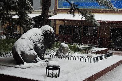 Boulder - White Bison